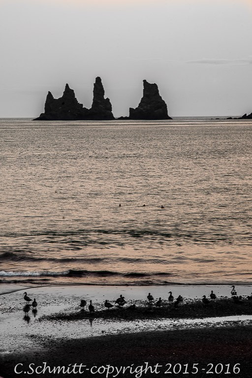 Oiseaux au soleil couchant sur la plage de Vik y Mirdall avec les trolls de Reynisdrangar en Islande photo noir et blanc