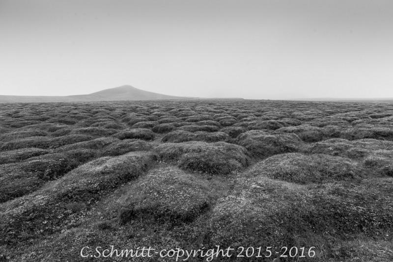 Les mousses recouvrent et adoucissent le paysage chaotique des coulées de lave au Lehrinjukur nord Islande photo noir et blanc