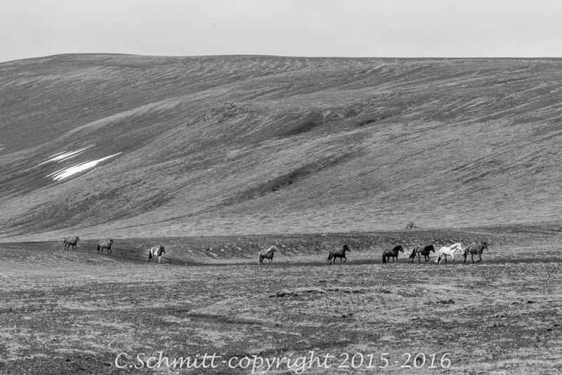 troupeau de chevaux sur la piste F208 vers le Landmannalaugar centre Islande photo noir et blanc